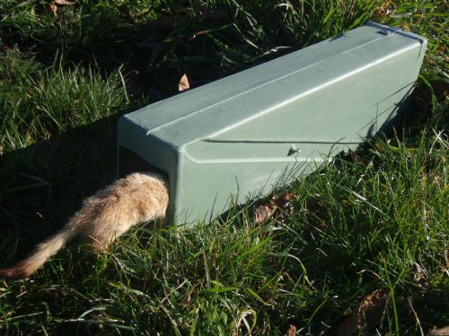 Cat Traps For Sale Nz