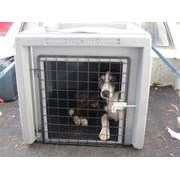 Picture for category Dog Boxes